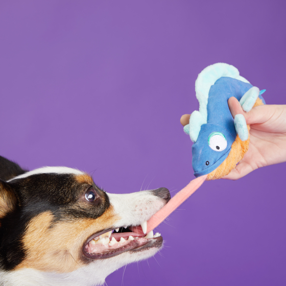 Photograph of BarkBox's Karla Chameleon product