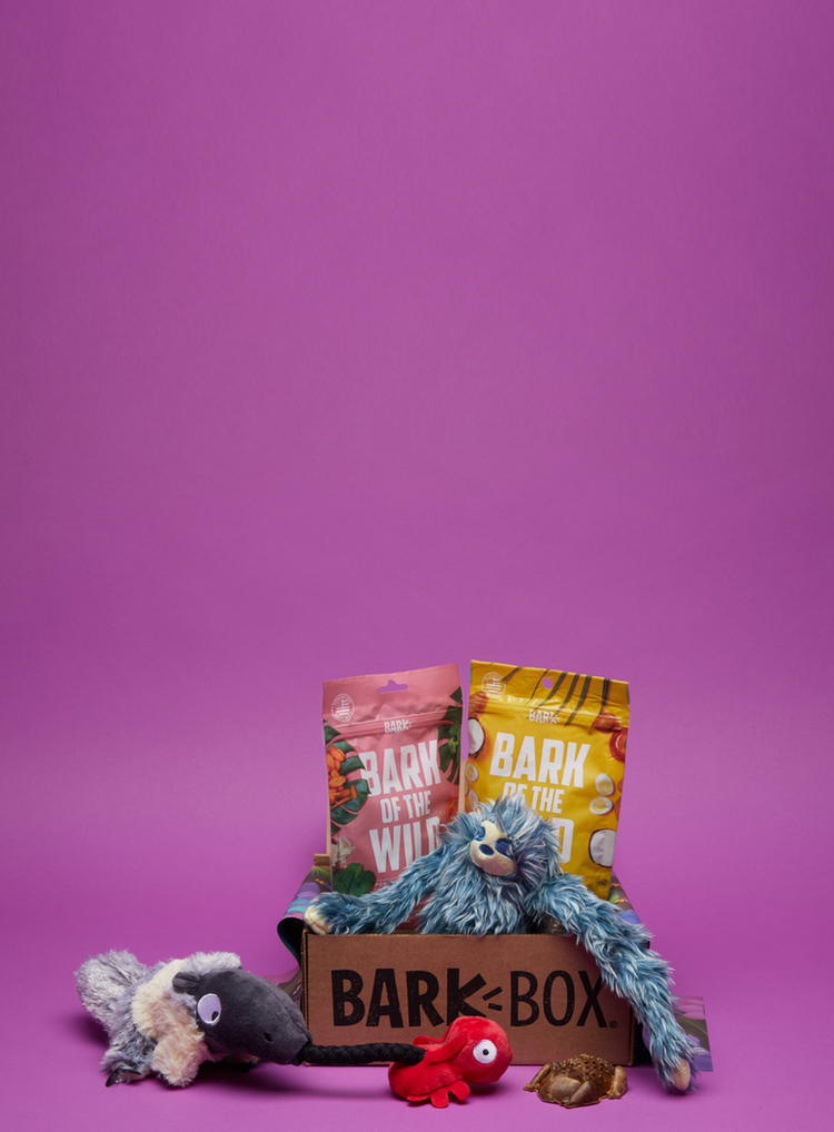 Photograph of Secrets of the Rainfurrest BarkBox themed BarkBox toys and treats