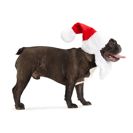 Photograph of BarkBox's Here Comes Santa Paws product