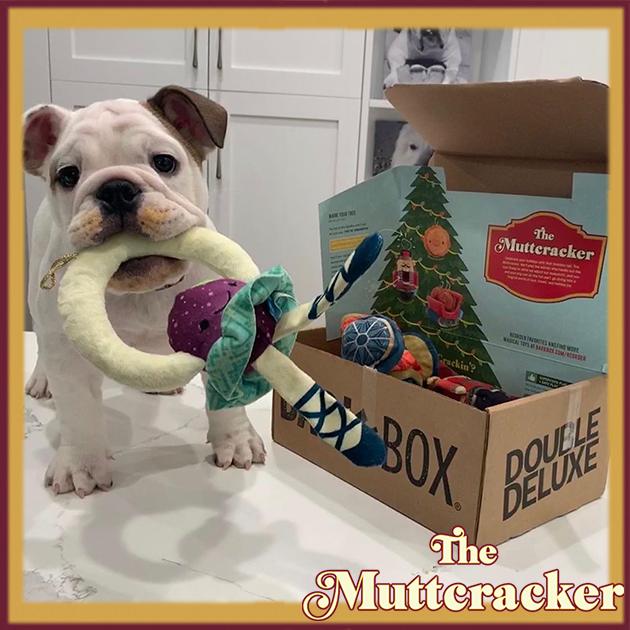 #BarkBoxDay Instagram image collage